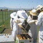 Bees Brothers: los emprendedores más jóvenes del mundo Bitcoin