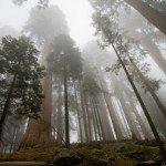 Bitcoin y la memoria de la Sequoia