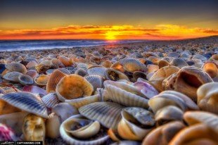 shelling-out