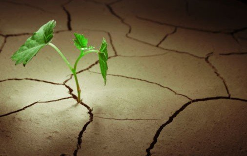 Sprout-in-barren-land