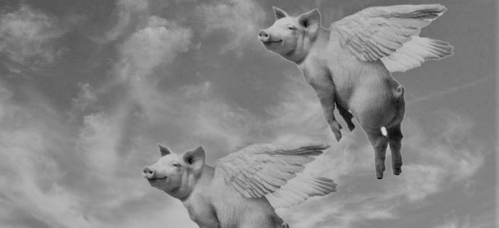 Flying_Pigs2